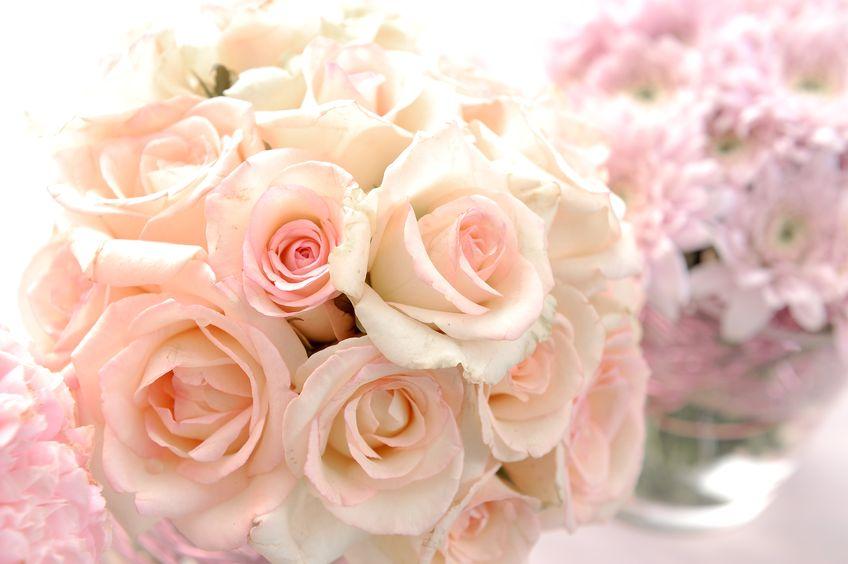 14558809 - closeup rose