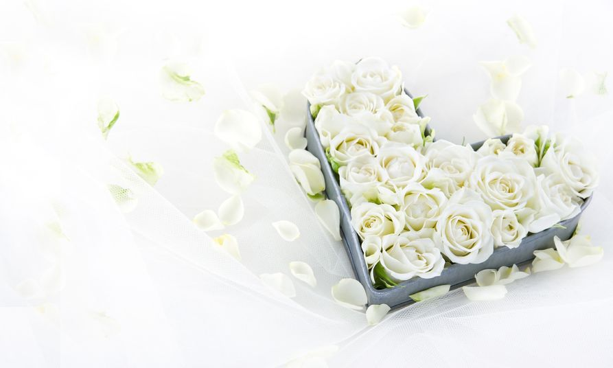 19979084 - white wedding roses in an old vintage metal heart shaped tray on dreamy lace background with floral petals