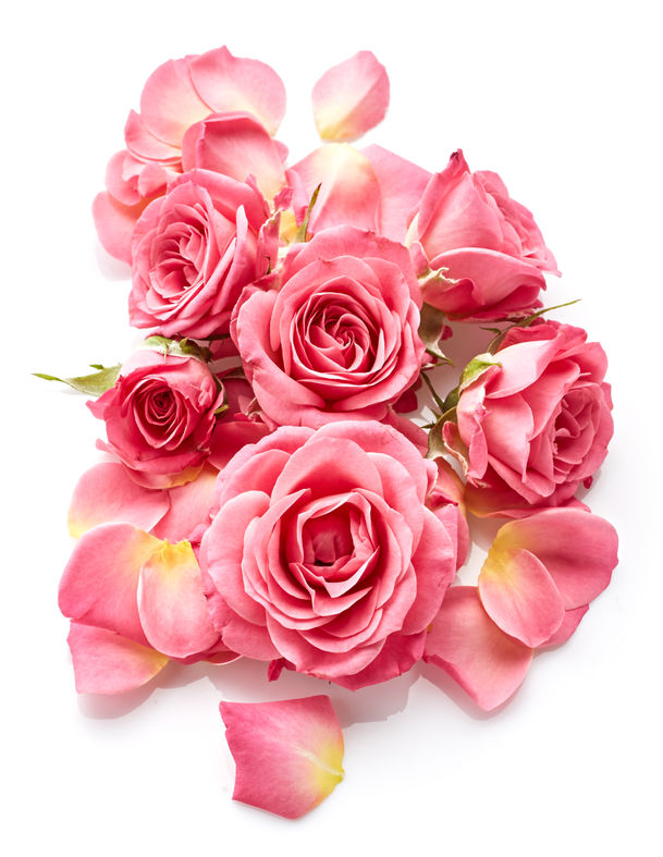 46267830 - pink roses isolated on white background