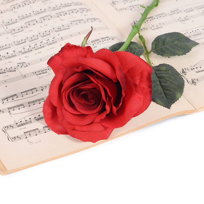 50034198 - the rose on notebooks with musical notes